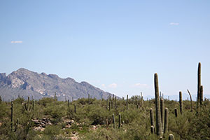 Northwest Tucson Land