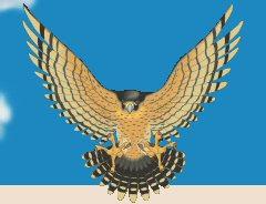 Fickett Falcon Image